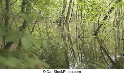 Wild Nature Swamp Luxurious Vegetation - Swamp luxurious...