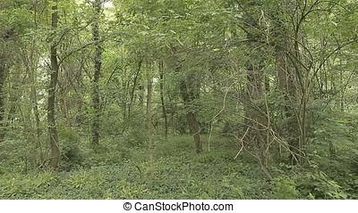 Overgrown Forest - Overgrown forest. Full shot. Daylight.