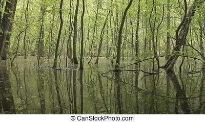 Fish Shape in Pan Shot over Swamp - Pan shot over swamp...