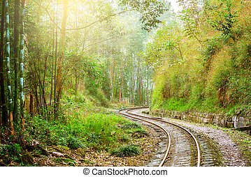 Narrow-gauge railway from Yuejin to Bagou in the jungle....