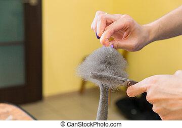 Cat grooming in pet beauty salon.