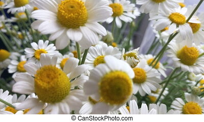 beautiful summer flowers Chamomile - close up of beautiful...
