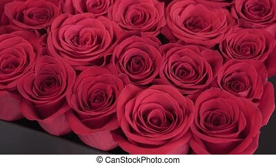 Box of Red Roses - Box of red roses flowers, gift concept