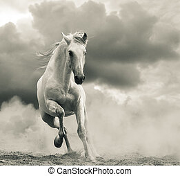 andalusian stallion running under the stormy skies -...