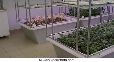 Soybeans greenhouse greenhouse soilless cultivation of...