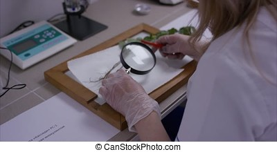 Scientist in a laboratory sitting at look using loupe....