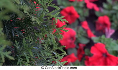 smoothly turning focus from tree to flower bed with red...