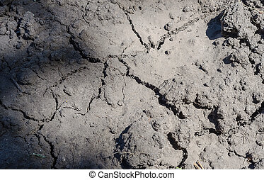 Texture of land dried up by drought, the ground cracks...