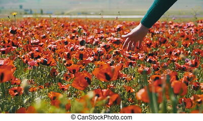 Woman Walks on a Field Poppy Among Flowering Red Poppies....