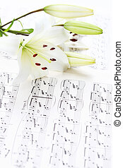 Music notes with white lily flower