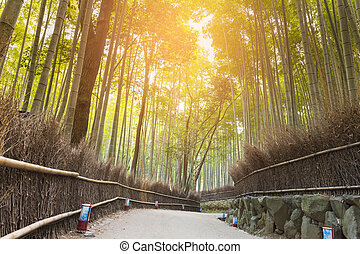 Walking way leading to Bamboo forest