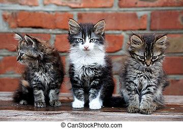three kittens on bricks background