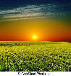 low sun in sunset over green field
