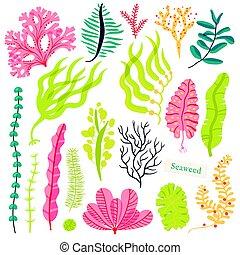 Sea plants and aquatic marine algae. Seaweed set vector...