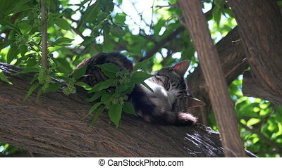 Homeless Gray Cat Sleeping on a Green Tree in the Summer.