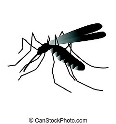 Mosquito isolated on white background.