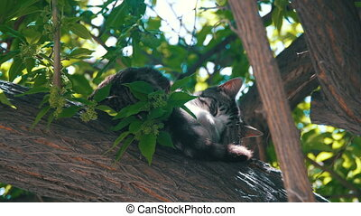 Stray Gray Cat Sleeping on a Green Tree in the Summer