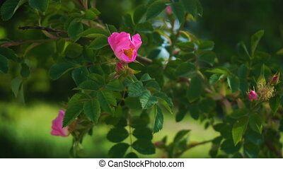 pink flower on green branch with leaves