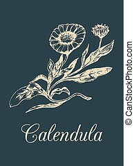 Vector calendula illustration with flowers. Hand drawn...