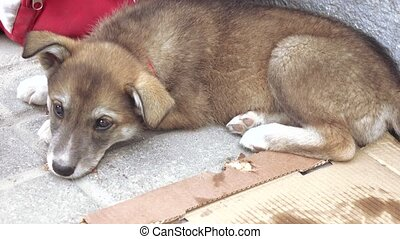 Stray dog on the floor - On the dirty cardboard is a stray...