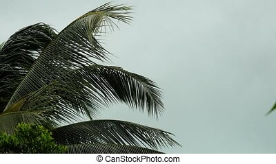 Storm winds blowing palm trees on tropical island. - Storm...