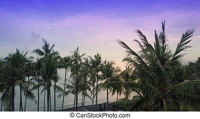 Aero view from drone on sea and beach on which palm trees of...