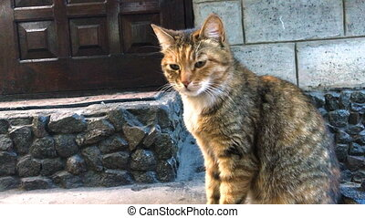 Ginger cat walk outdoors courtyard - close up of Ginger cat...