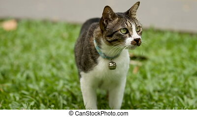 Cute spotted cat with a bell on the collar going from view...