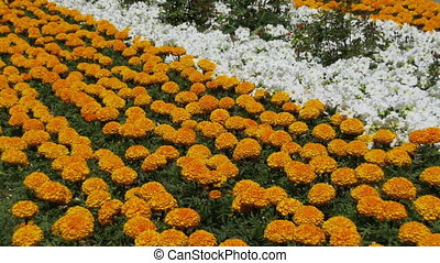Flower Bed in the Park - Flower bed in the park. Bright...