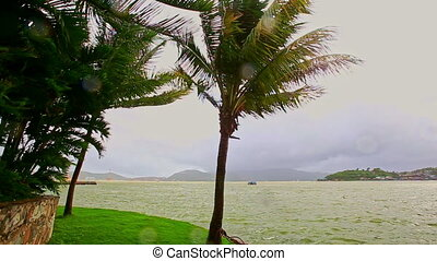 Strong Wind Shakes High Palms against Sea Cloudy Sky - very...