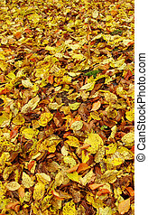 carpet of brown,yellow and orange  leaves in autumn