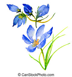 Wildflower flower in a watercolor style isolated.