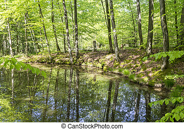 tarn in a forest - sunny scenery showing a tarn in a forest...