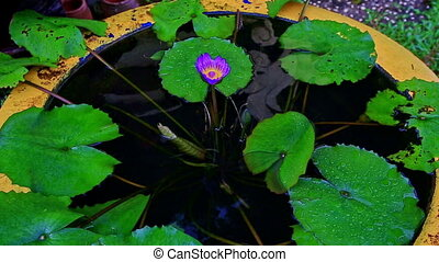Big Vase As Pond with Water Flowers in Tropical Park