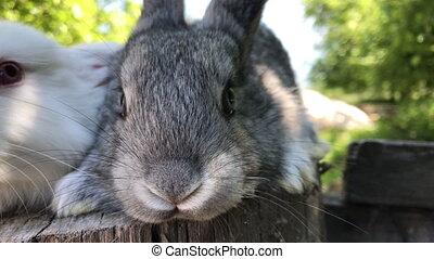 Growing rabbits at its Manor. Individual entrepreneur holding rabbits. Muzzle of a rabbit close-up.