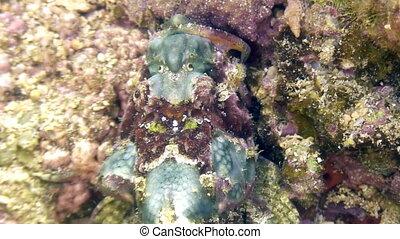 Fish stone is masked underwater in ocean of wildlife...