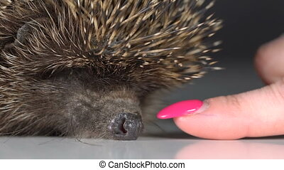 The girl touches the hedgehog with her hand. Slow motion
