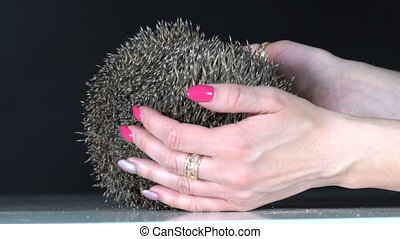 The girl is holding a hedgehog in her hands. Slow motion