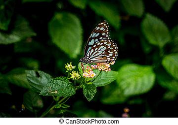 fjäril, Blomstrar