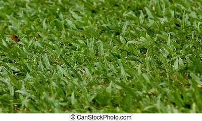 Natural background with green cutted grass. Fresh lawn.