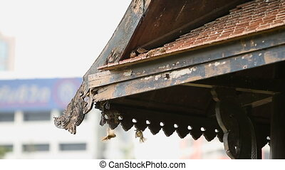 Sparrows hop on the carved wooden eaves of the roof. Lumpini...