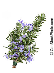 Rosemary Herb Flower - Rosemary herb leaf sprig in flower...