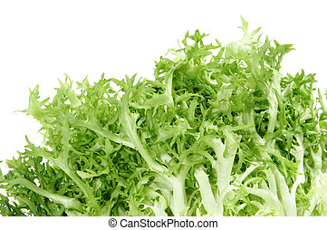 escarole endive - an escarole endive isolated on a white...