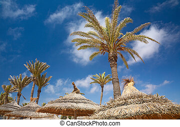 thatched sunshade and palm trees