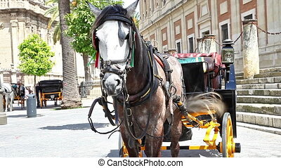Seville Horse carriage - Spanish horse carriage in city...