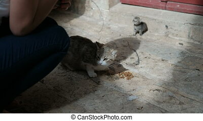 Woman is feeding a hungry cat with a small kitten on the...