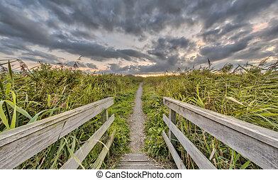 Wooden bridge on walking trail