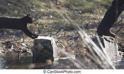 Super slow motion of cat jumping over river stones behind...
