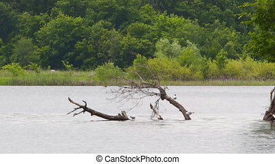 Seagulls are sitting on a dry tree. A dry tree is in the...