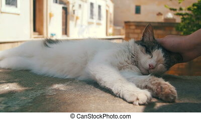 Homeless White with Gray Cat Sleeps on the Street on a...